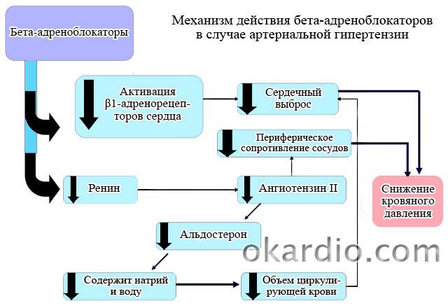 механизм действия бета-адреноблокаторов при гипертензии