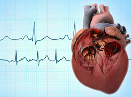 Обзор фибрилляции предсердий: причины, диагностика и лечение, чем она опасна
