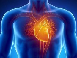 Где находится сердце у человека в норме, аномальное расположение