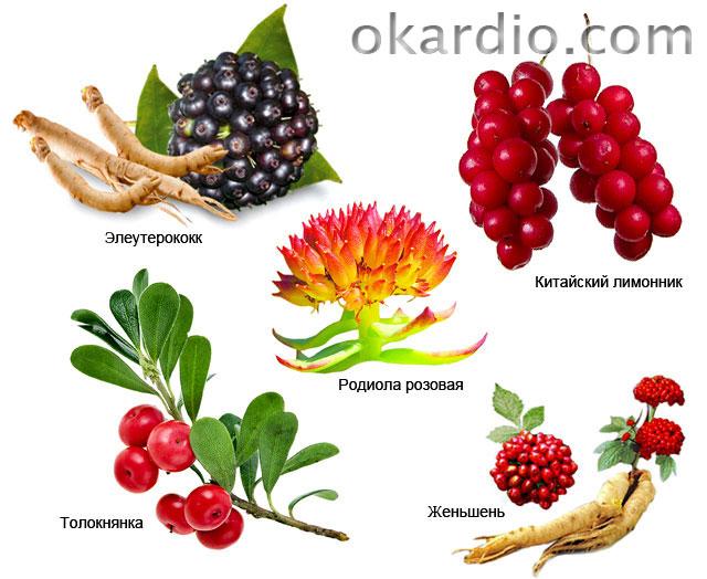 ягоды и травы, которые входят в состав бодрящих экстрактов