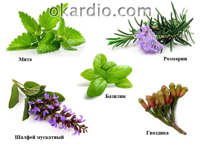 растения для ароматерапии