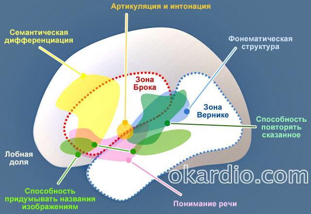 тип афазии зависит от того, какой участок мозга был поражен
