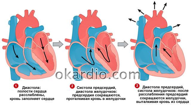 От чего бывает низкое сердечное давление