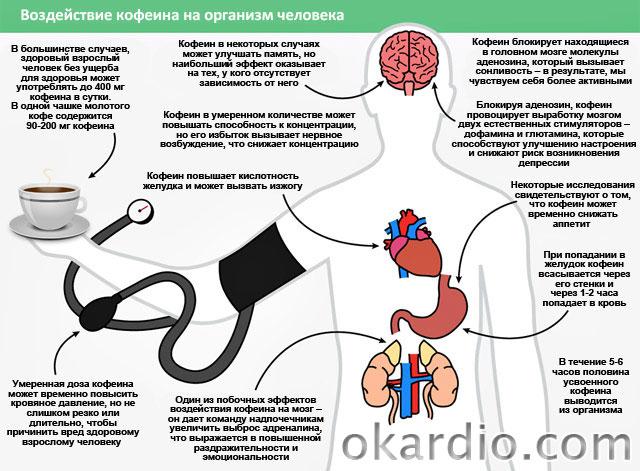 воздействие кофеина на организм человека