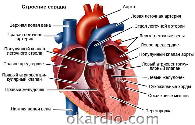 Сердечная недостаточность чем грозит