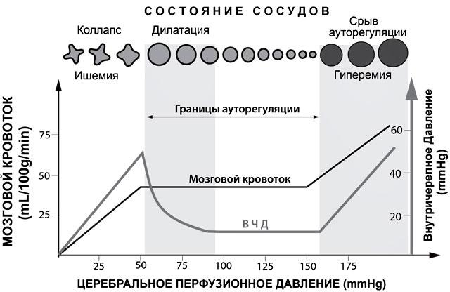 ауторегуляция сосудов головного мозга