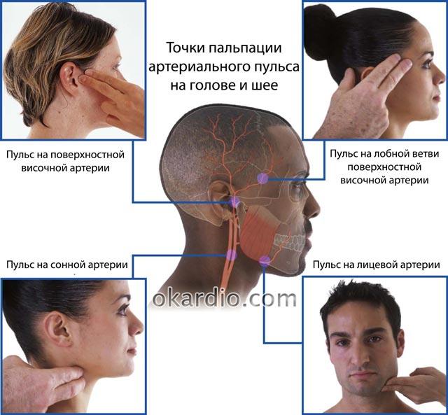 определение артериального пульса на голове и шее