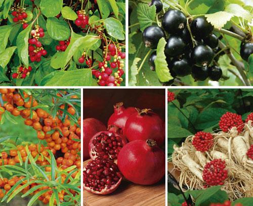фрукты и ягоды, повышающие давление