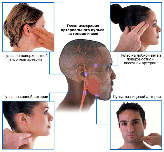 точки измерения артериального пульса на голове и шее