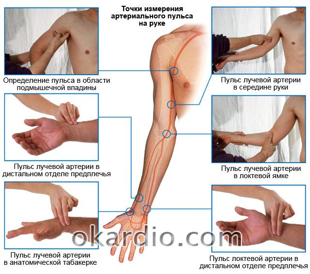 точки измерения артериального пульса на руке