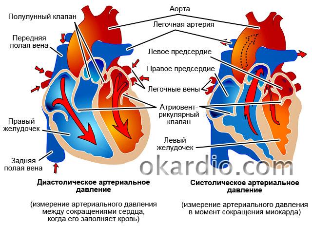 Изображение - Артериальное давление систолическое и диастолическое 119-3