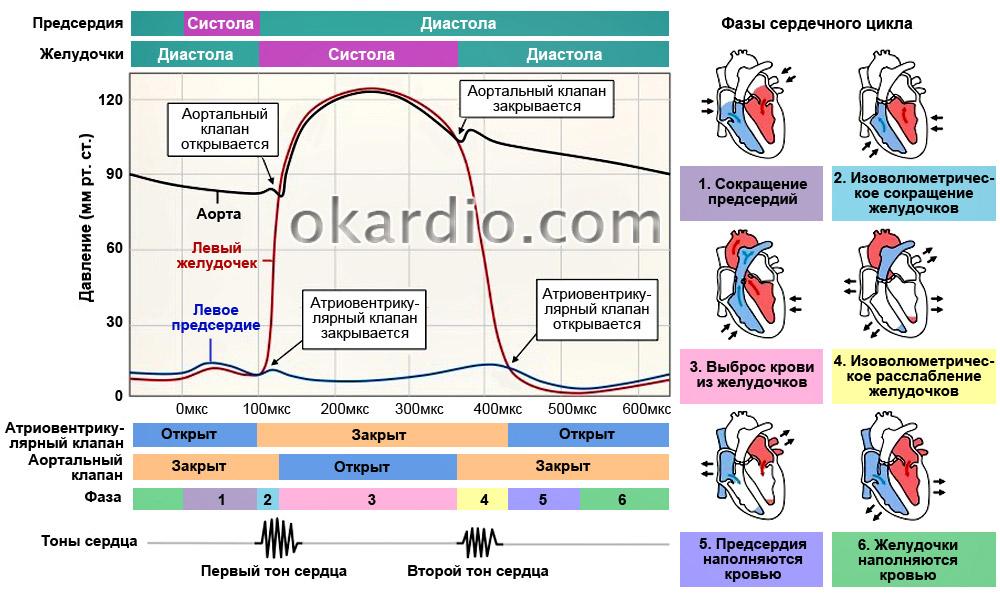 Разница между систолическим и диастолическим давлением называется 54
