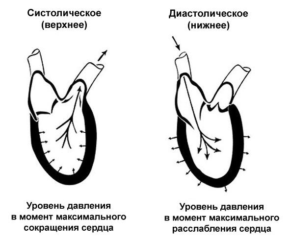 диастолическое и систолическое артериальное давление