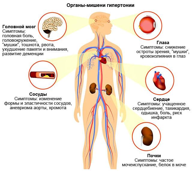 органы-мишени гипертонии