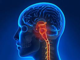 Исчерпывающий обзор стволового инсульта: причины, симптомы и лечение