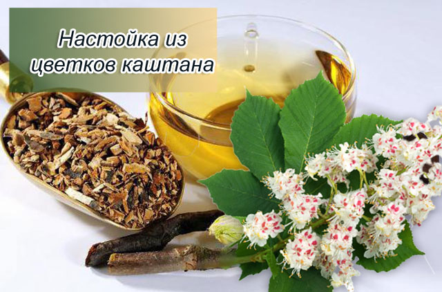 спиртовая настойка цветков конского каштана