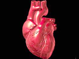 Увеличенное сердце: причины, возможные патологии, лечение