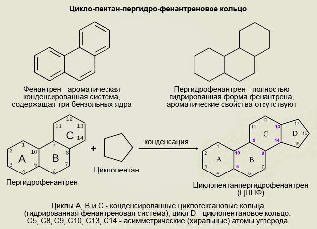 цикло-пентан-пергидро-фенантреновое кольцо