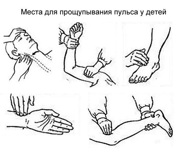 места на теле для прощупывания пульса