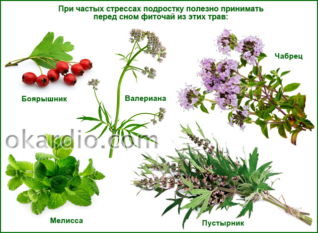 травы для фиточая при частых стрессах у подростка