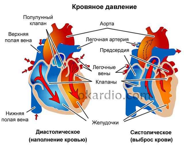 Изображение - Лечение низкого нижнего артериального давления 109-01