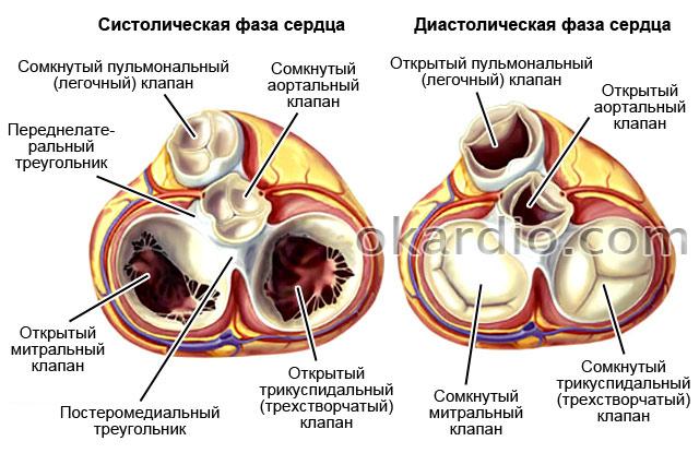 Замена клапана на сердце реанимация