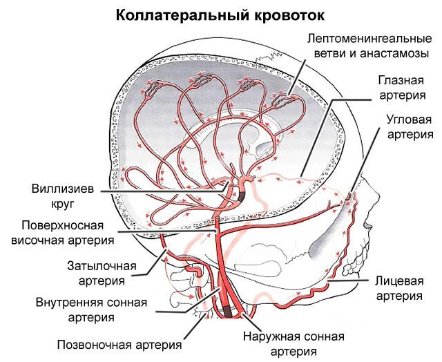 коллатеральный кровоток