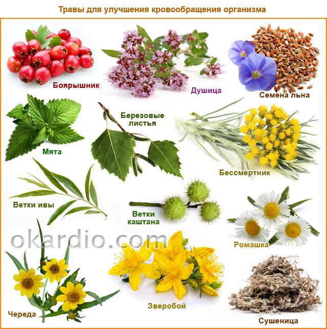 травы для улучшения кровообращения организма