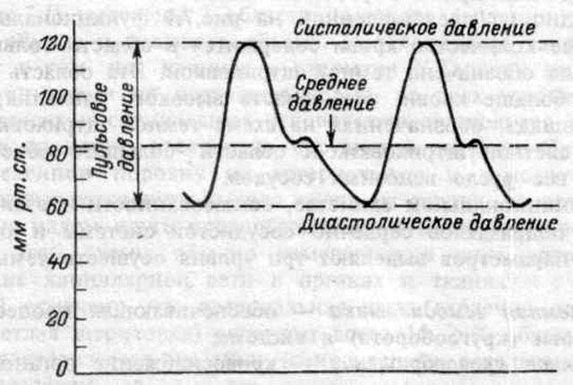 графическое изображение пульсового давления