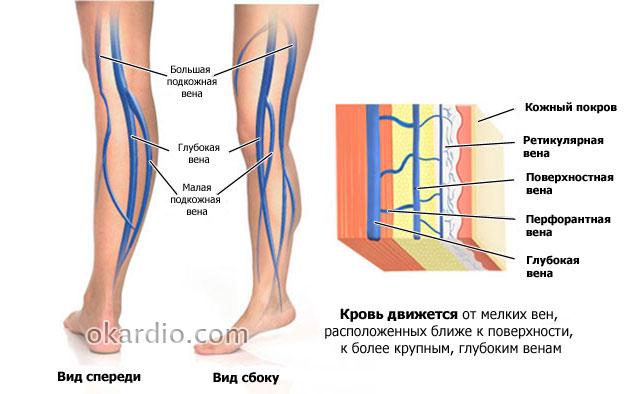 Ретикулярный варикоз нижних конечностей лечение — Варикоз