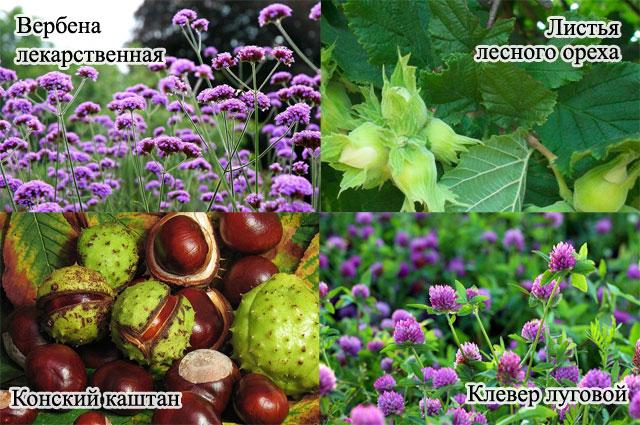 вербена лекарственная, конский каштан, клевер луговой, листья лесного ореха
