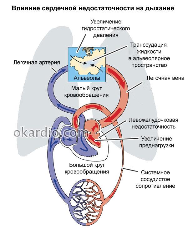 влияние сердечной недостаточности на дыхание