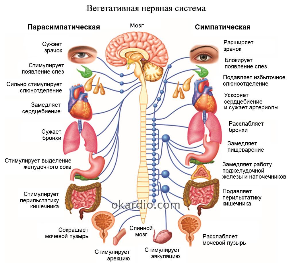 Характеристика гипертонического типа всд: причины и лечение