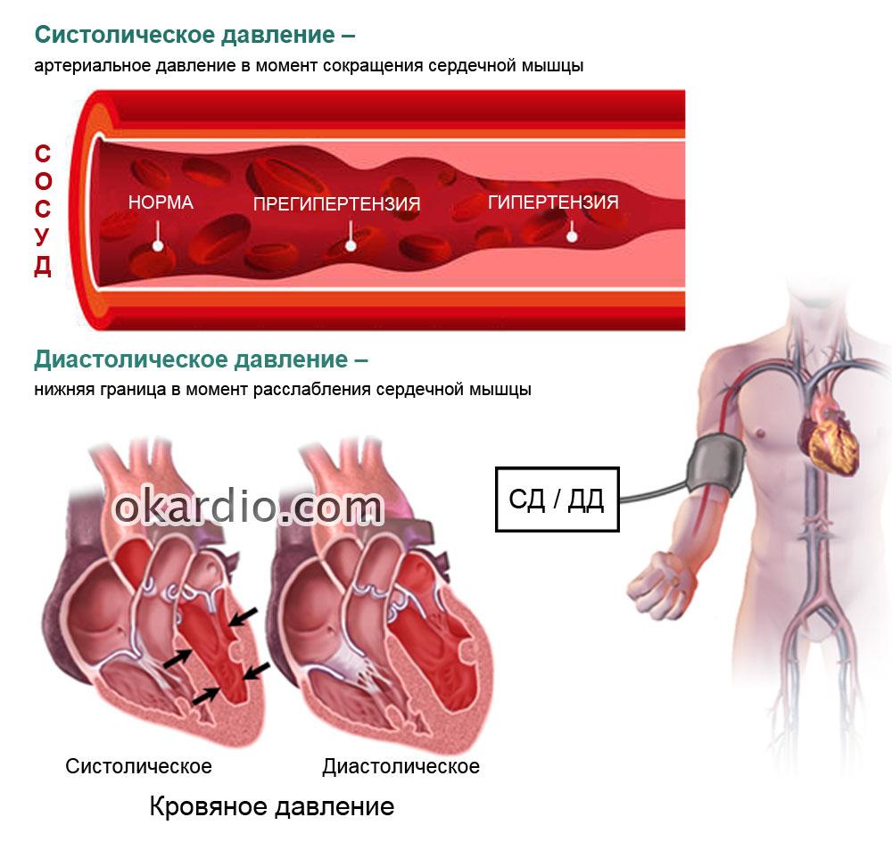 ВСД по гипертоническому типу: причины, симптомы, лечение, препараты