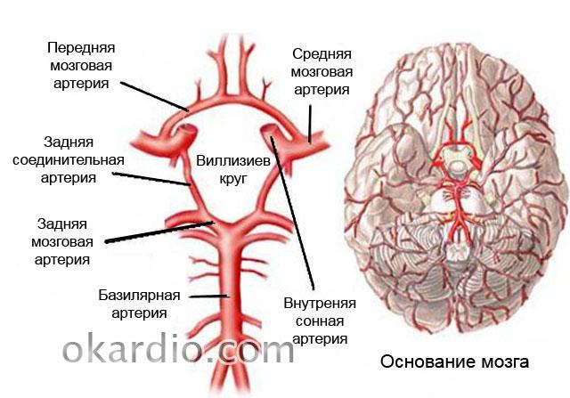 Ультразвук не проходит через черепную коробку
