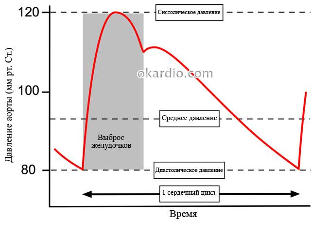 артериальное давление на графике