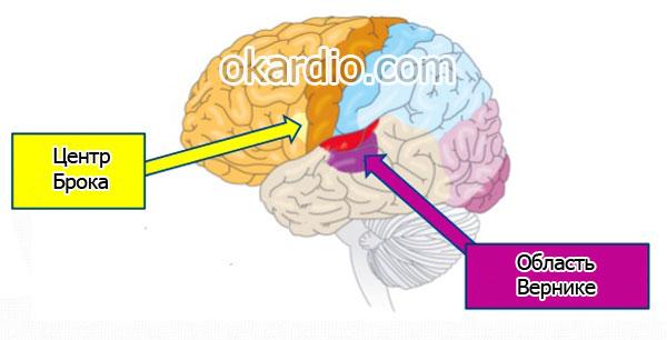 центры мозга Брока и Вернике