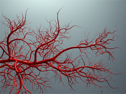кровяные сосуды