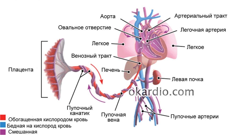 Нарушение маточно-плацентарного кровотока: причины, степени, лечение