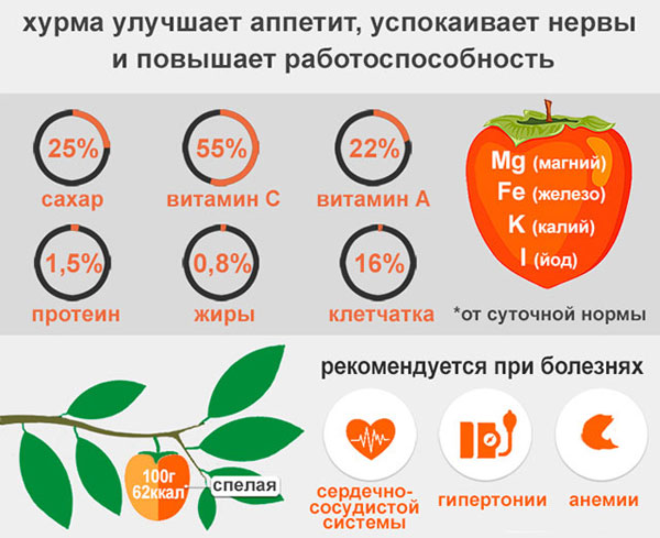 Топ 10 продуктов, разжижающих кровь и укрепляющих стенки сосудов