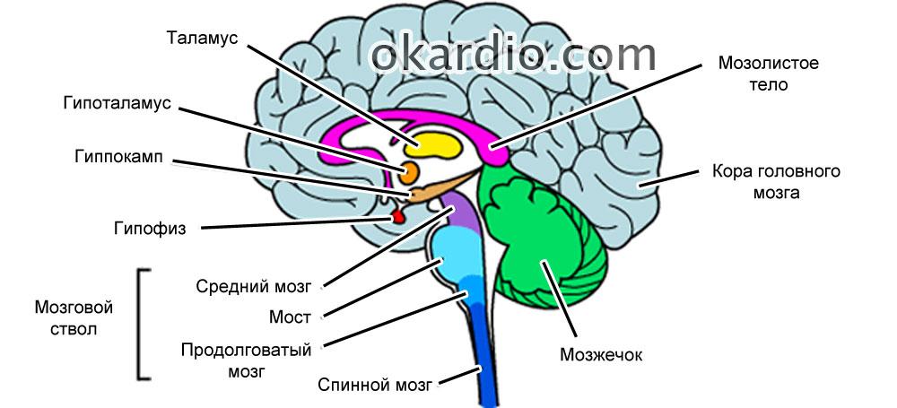 Сосудистая деменция: что это, симптомы и лечение, диагностика, прогноз
