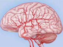 Шесть действенных способов, как улучшить мозговое кровообращение