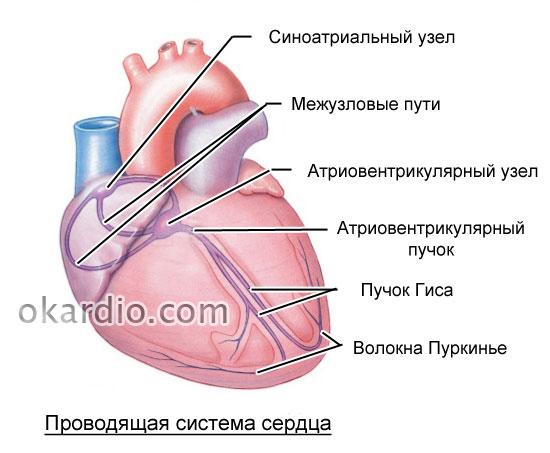 Фибрилляция желудочков: причины, симптомы, диагностика и лечение