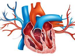 Стеноз митрального клапана: причины, диагностика, лечение