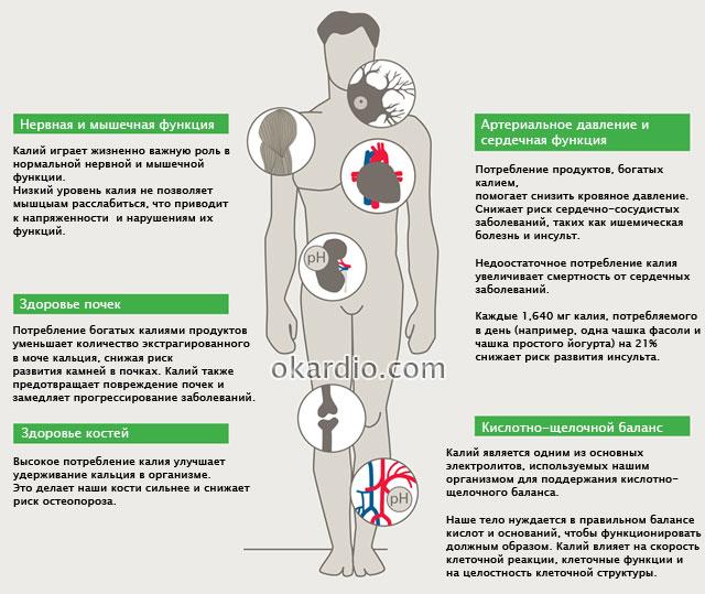 функции калия в организме человека
