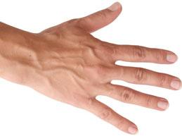 выступают вены на руках