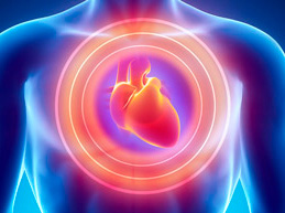 изображение человека и сердца