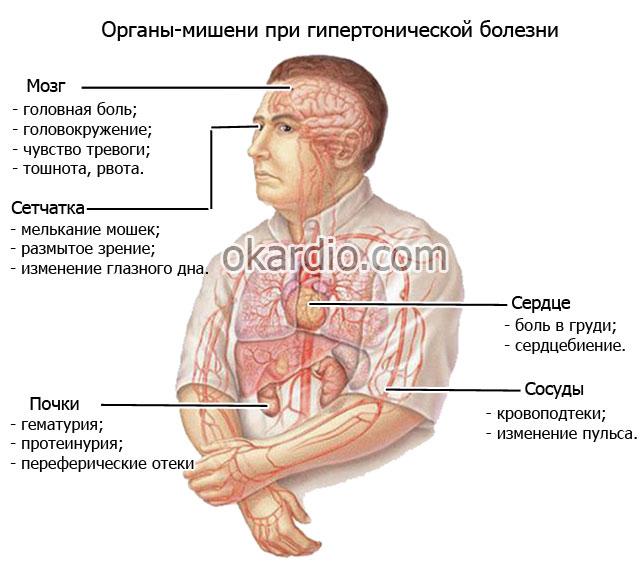 органы мишени при гипертонической болезни
